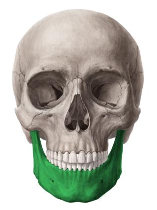 anatomia della mandibola
