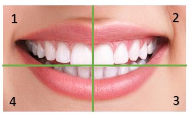 numerazione dei denti